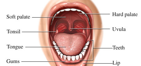 inside mouth