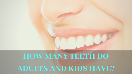 How many teeth do adults and kids have? Have you ever wondered?